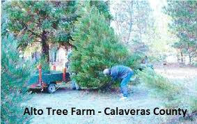 Santa Cruz Ca Christmas Tree Farms by California Christmas Tree Association Find Your Real Christmas