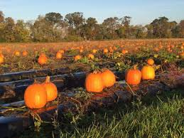 Pumpkin Patch Hayrides Lancaster Pa by 7 Best Pumpkin Patches In Virginia