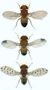 13 Best Flies Images On Pinterest | Facts, Fruit Flies And Commercial How To Get Rid Of Flies Outdoors Step By South Portland Backyard Latest Battleground In War Against Winter Clean Up Dog Waste From A Backyard 11 Steps The Chicken Chick Flystrike Chickens Causes Quickly And Naturally Whiteflies Identify Old Cluster Fly Facts Control Small Fly Infestation Uk How Get Rid Ants Yard Driveway Easiest Most Fun Way Fruit 25 Unique Outside Ideas On Pinterest Sliding Doors
