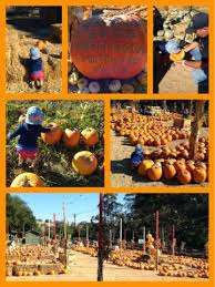 South San Jose Pumpkin Patch by Silicon Valley Toddler And Beyond Pumpkin Patch Report Webb