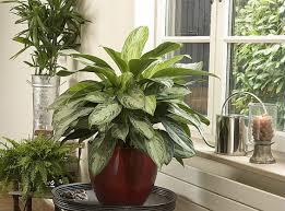 plantes vertes d interieur dehors les plantes vertes