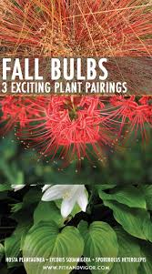 fall blooming bulbs 3 ideas for exciting autumn plant pairings