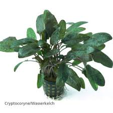 lot de plantes pour aquariums de 100 à 120 cm à prix avantageux