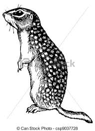 Watchful gopher standing on white background vector Search Clip