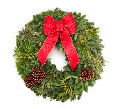 Best Live Christmas Trees To Buy by Granstrom Evergreens L L C