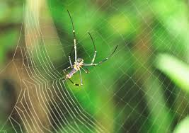 Remains Of The Day Spiders by Robert The Bruce And The Spider U2013 Inspiring Story U2013 Never Give Up
