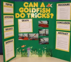 Science Fair Tri Board Poster Directions Ideas