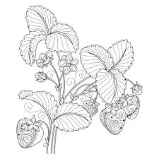 Fruit Adult Coloring Page Thumbnail Flowers Pages