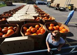 Pumpkin Carving Tools Walmart by On Wisconsin World Pumpkin Record Poised To Fall In Richland