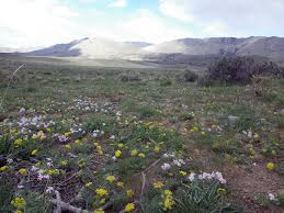 Colorado Blm Christmas Tree Permits programs natural resources native plant communities about