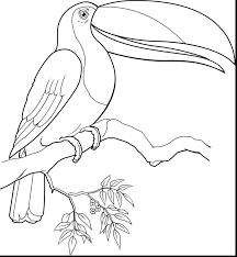 Livre De Coloriage Pour Les Adultes Toucan Doiseaux Dessin Style