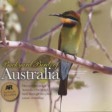 Backyard Birds Of Australia - YouTube Introduced Birds Birds In Backyards Best 25 Bird Watching Ideas On Pinterest Pretty Backyard 510 Best Birds Of A Feather Images Blackwinged Stilt 2016 Results Aussie Count Rainbow Lorikeet Evolve Their Behavior Without Chaing Bodies The To Feed Or Not To Audubon Female Blackbird Front Yard And Landscaping Ideas Designs Country Garden Striped Honeyeater Inland E Australia My