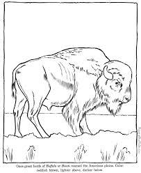 Buffalo Coloring Page Sheet
