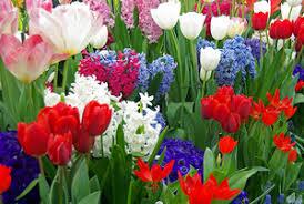 garden design garden design with now is the time bright gardeners