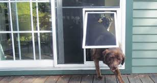 dog doors pet doors the glass guru
