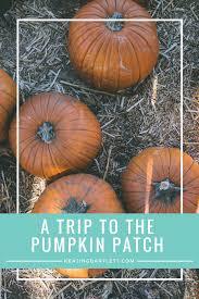 Pinery Bonita Pumpkin Patch by 100 Bates Nut Farm Pumpkin Patch Hours Nuts About Pumpkins
