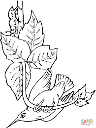Click The Bee Hummingbird Coloring Pages