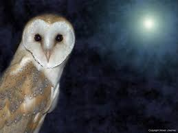 Free Barn Owl Wallpaper Download - Animals Town Barn Owl United Kingdom Eurasian Eagleowl Wallpaper Studio 10 Tens Of Barn Owl Wallpapers And Backgrounds Pictures 72 Images By Faezza On Deviantart Bird Falconry One Animal Closeup Free Image Snowy Hd 78 Sits Pole Wooden Dove Birds Images Hd 169 High Wallpaper 1680x1050 11554 Free Backgrounds At Wildlife Monodomo 2 One Online 4k Desktop For Ultra Tv Wide