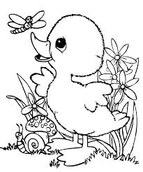 Dragonfly Coloring Pages Cute Baby Duck Page And