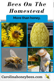 Value Of Beekeeping For Preppers & Homesteaders | Beekeeping ... How To Keep Bees A Beginners Guide Bkeeping Deter And Wasps And Identify Which Is Family 2367 Best Homestead Animals Images On Pinterest Poultry Raising Best Bee Hives Images Photo Wonderful To Away Become A Backyard Bkeeper Fixcom Why Your Child Needs Working Bee Urban Honey Back Yard Made Simple Image On Marvellous 301 Keeping Bees 794 The Complete 7step Chickens In Plants That Simplemost