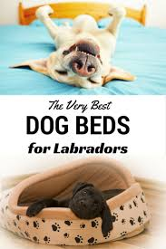 Big Lots Pet Furniture Covers by Best Dog Beds For Labs