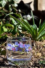229 best Flower Essences images on Pinterest