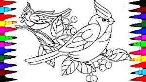 Coloring Pages Little Live Pets BIRDS Book Videos For Kids Learning Rainbow Colors