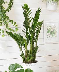entretien plante grasse d interieur 10 plantes d intérieur faciles d entretien et quasi intuables