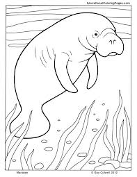 Manatee Coloring Mammals Pages