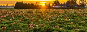 Best Pumpkin Patch Lancaster Pa by Pumpkin Picking And Corn Mazes In Long Island Ny