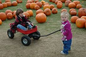 Pumpkin Picking Farm Long Island Ny by Long Island Fall Festival Has Some Much To Offer Come And Check