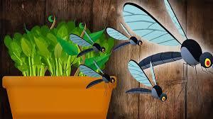 kleine fliegen in der blumenerde so werden sie sie los