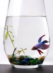 aquarium poisson prix aspirateur aquarium modèles et prix ooreka