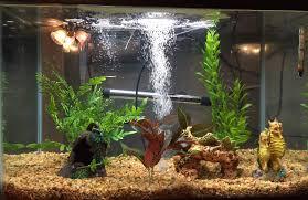 petco aquarium plants 1000 aquarium ideas