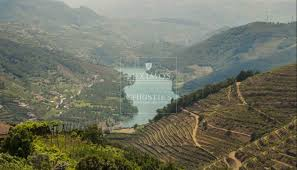 100 Stunning Views Vineyard With Stunning Views To Douro River Vila Marim Portugal A Luxury Vineyard For Sale In Vila Real Property IDCS00611 Christies