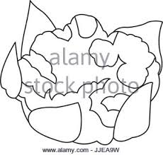 cauliflower with leaves ve able healthy food Stock