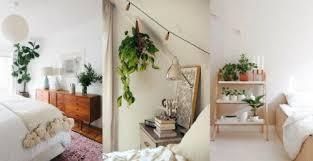5 zimmerpflanzen die deinen schlaf verbessern besser