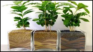 le bureau verte les plantes à offrir le garrit