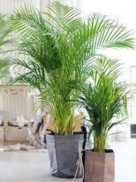 12 luftreinigende pflanzen pflanzenfreude