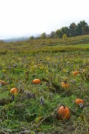 Pumpkin Patch Long Island Ny by Best 25 Pumpkin Picking Ny Ideas Only On Pinterest Pumpkin