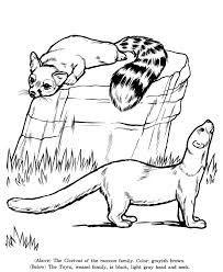 Civet Cat And Tayra Coloring Page