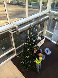 10ft Christmas Tree Uk by Real Christmas Trees In Your Office Look U0026 Smell Wonderful
