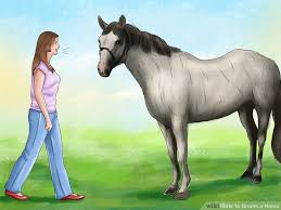 Horse Coat Shedding Tool by How To Groom A Horse 13 Steps With Pictures Wikihow