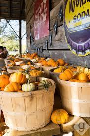 Best Pumpkin Farms In Maryland by Best 25 Pumpkin Patch Corn Maze Ideas On Pinterest Pumpkin