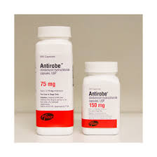 clindamycin for cats antirobe antirobe capsules antirobe for dogs antirobe for