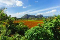 Tobacco Fields In Vinales Cuba Cuban Countryside Stock Photo