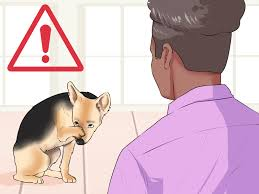 Dog Hair Shedding Blade by 3 Ways To Control Shedding Dogs Wikihow