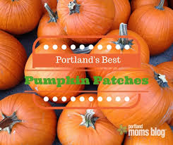 North Plains Pumpkin Patch by 14 Family Friendly Pumpkin Patches All Over Portland