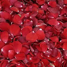 Best 25 Red rose petals ideas on Pinterest