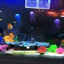 Extra Large Fish Tank Decorations by Large Caves For Fish Tanks The Best Cave